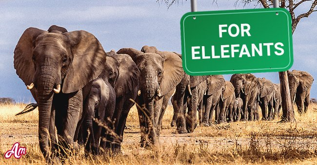 Whenever the first elephant comes across this sign, he will trumpet loudly   Photo: Shutterstock