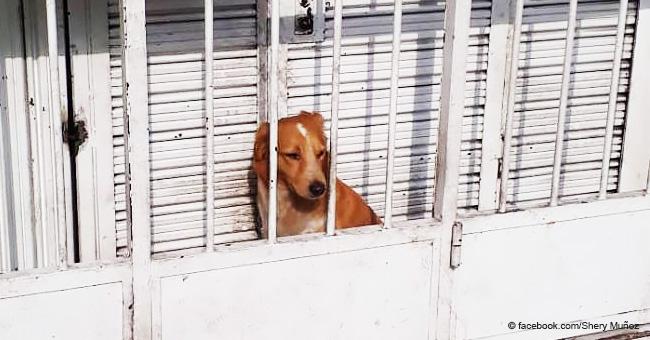 Mujer denuncia que dejan a perro encerrado y triste en diminuto espacio para cuidar el negocio