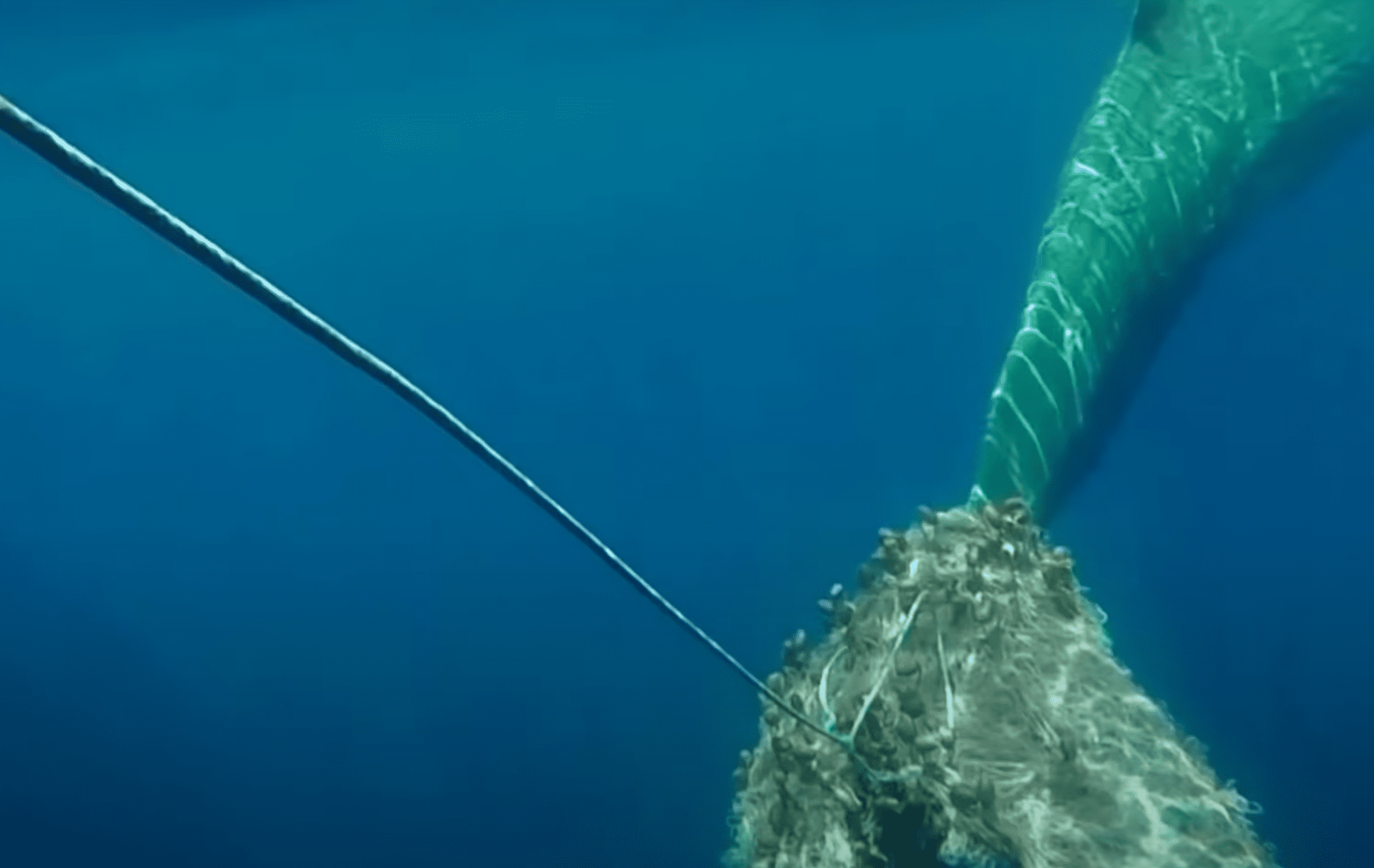 Whale stuck in fishing net | Photo: Youtube/Reuters