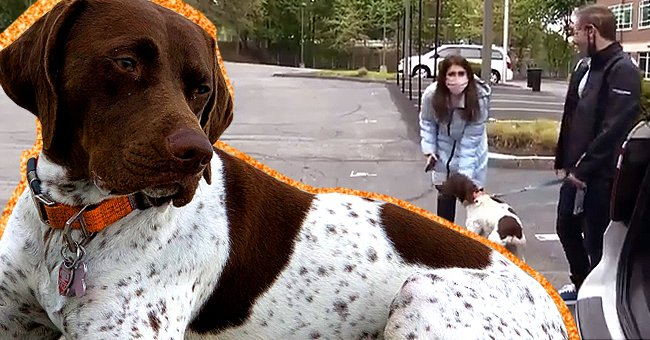 Boston News Crew Accidentally Found a Stolen Dog While Filming a Story about Its Search