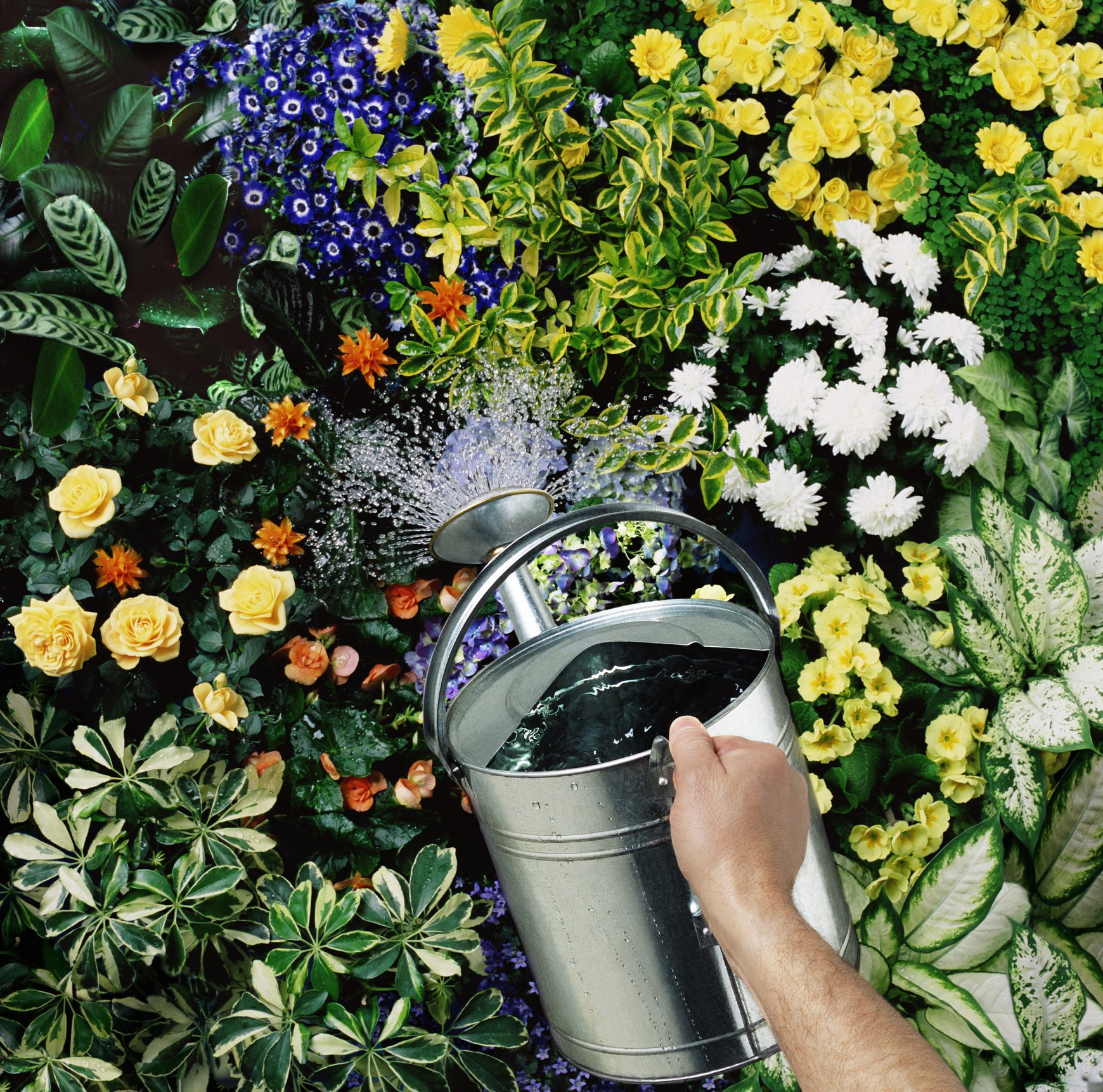 Man watering flowers, close-up of hand and watering can | Photo: Getty Images
