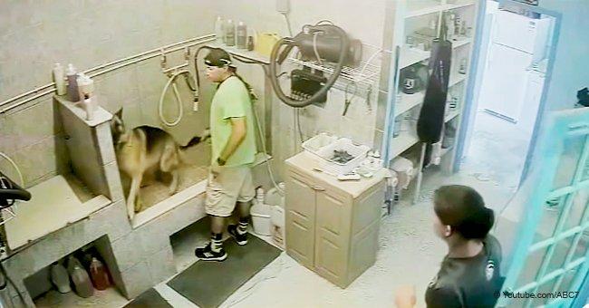 Peluquero toma cruelmente la cola de perro que no se quedaba quieto y tuvieron que amputársela