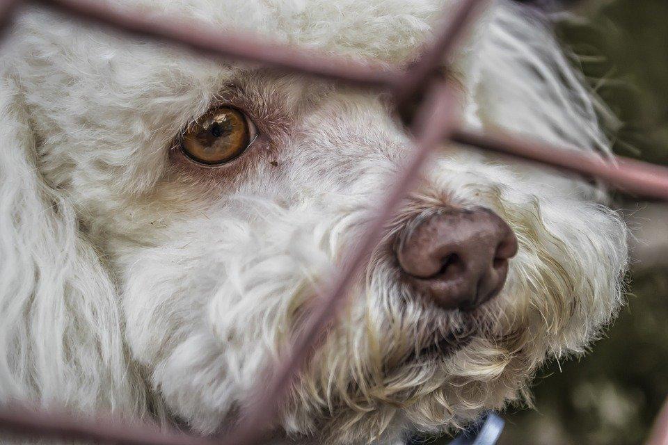Un chien triste enfermé | Phoro : Pixabay