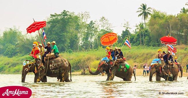Les balades à dos d'éléphant : la dure vérité qui se cache derrière cette attraction en photos