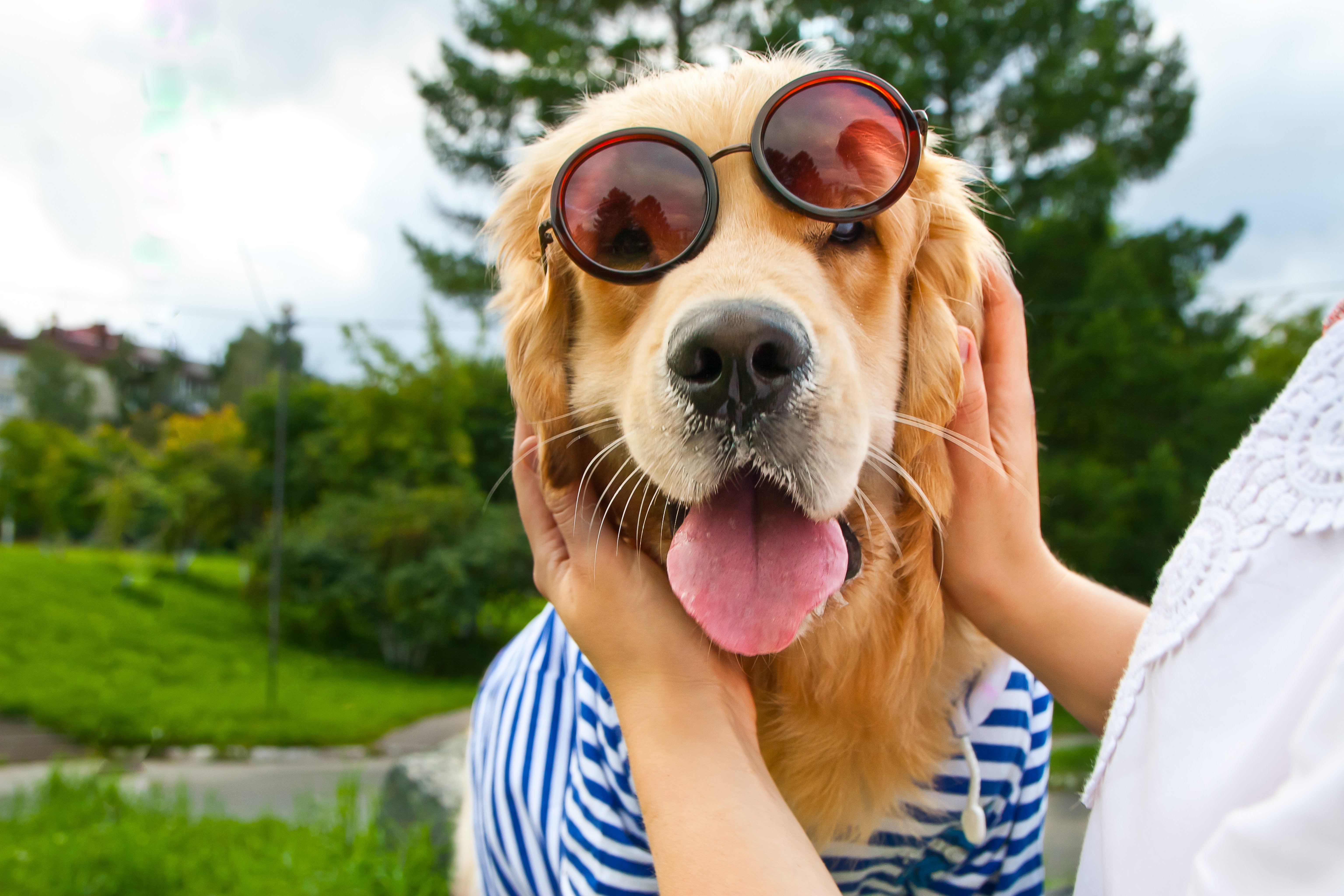 A Golden Retriever wearing glasses smiles for the camera   Photo: Shutterstock/Happyel777