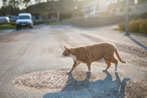 Photo of a cat walking on the road | Photo: Getty Images