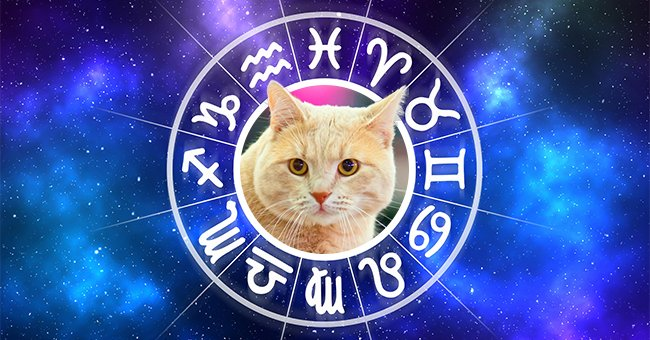 British Cats Are the Best Match for Leo — Find Out Matching Breeds for Other Zodiac Signs