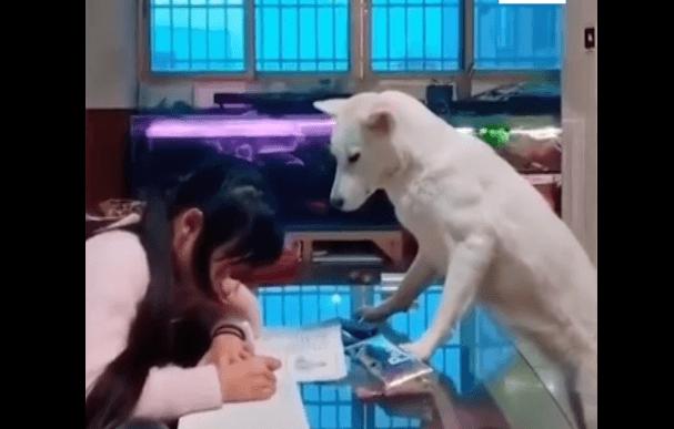 Perro vigilando.   Imagen: Facebook / South China Morning Post