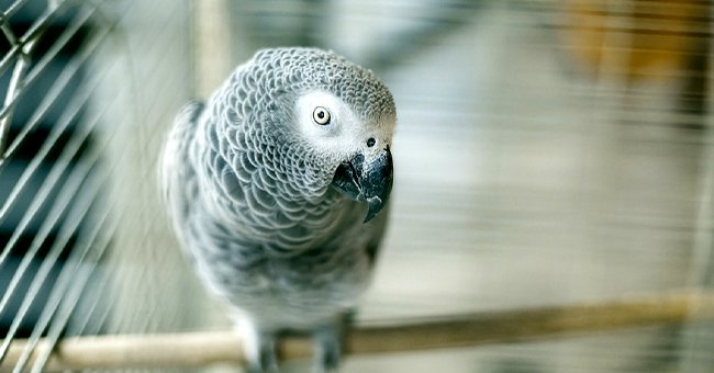 Daily Joke: A Talking Parrot Was Spoiling a Magician's Tricks