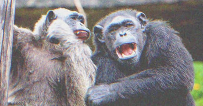 Rude Teens Mock Monkeys at the Zoo, Rich Woman Teaches Them a Lesson — Story of the Day