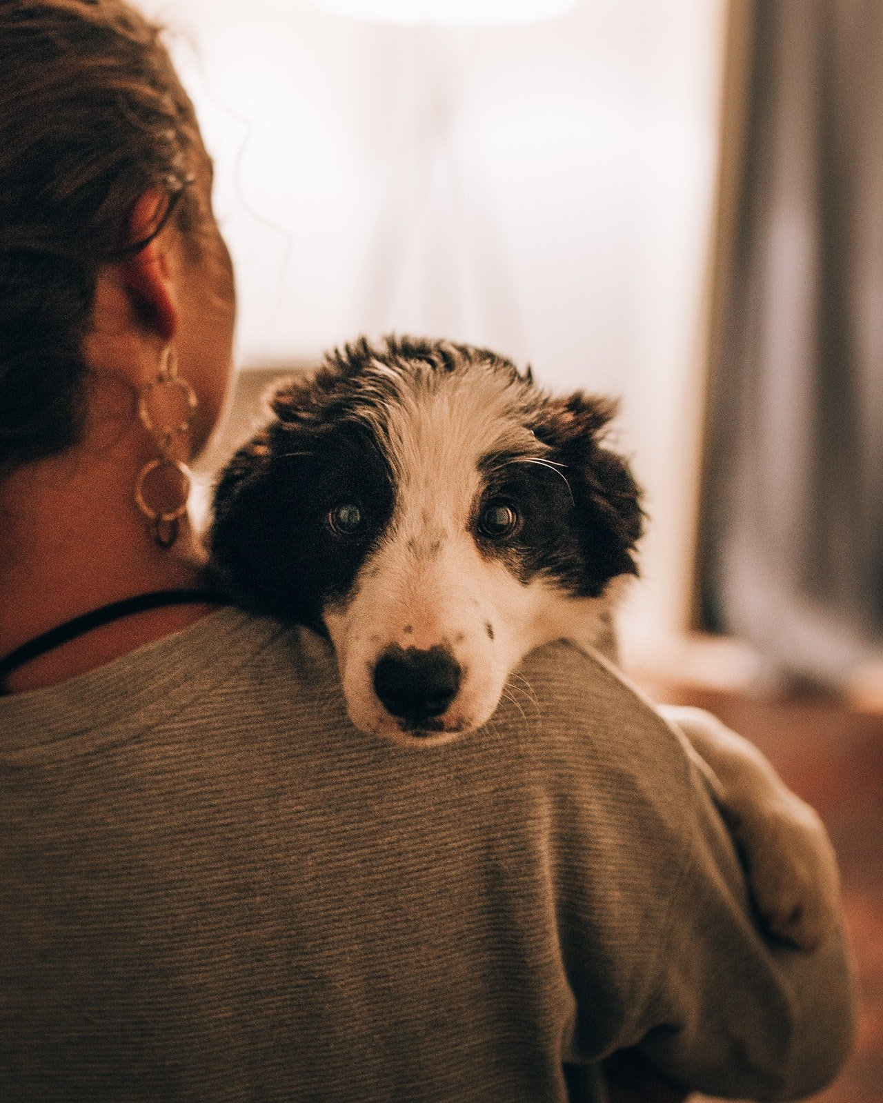 Photo of a woman carrying a dog | Photo: Pexels