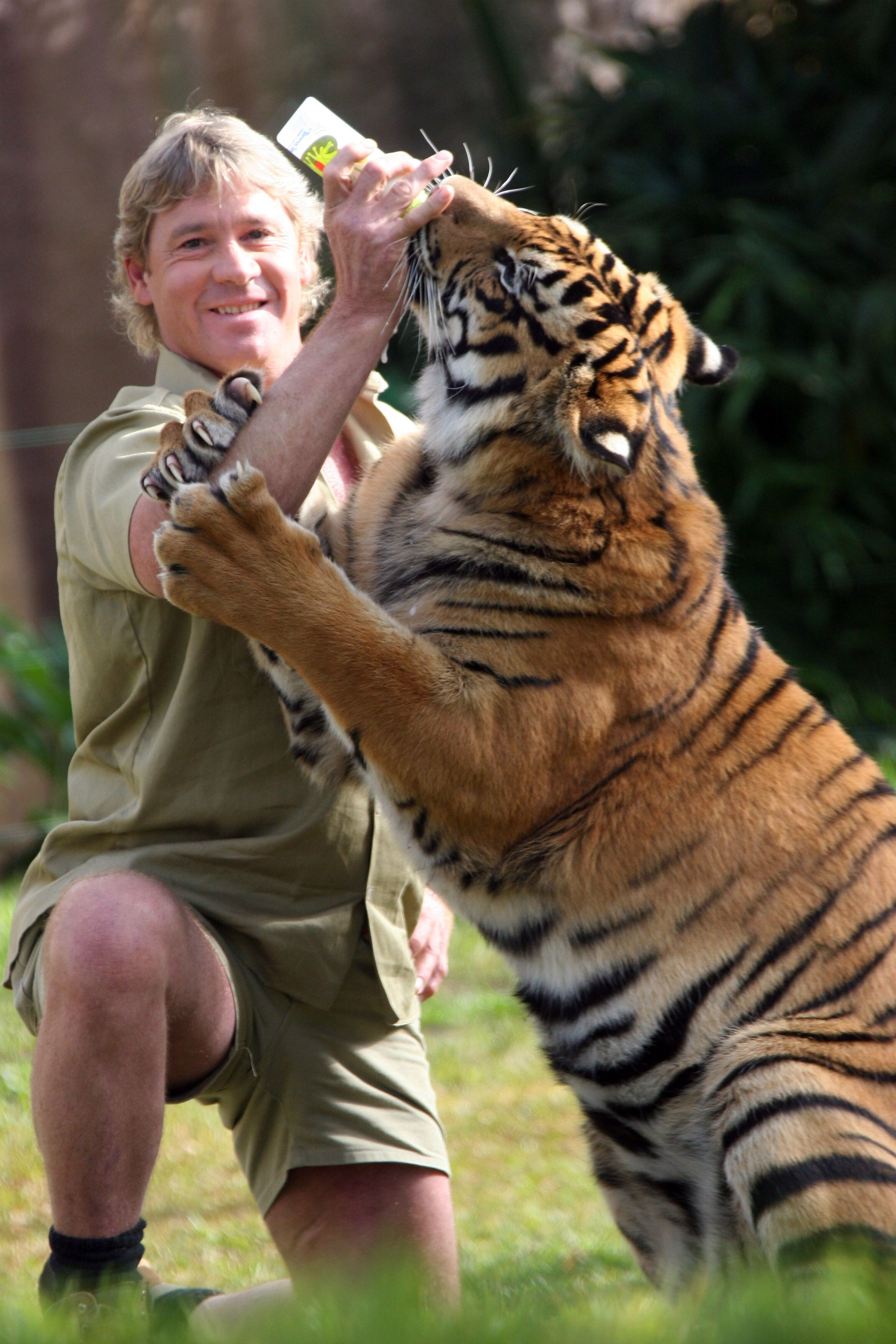 Steve Irwin bottle-feeds a tiger at Australia Zoo June 1, 2005 | Source: Getty Images