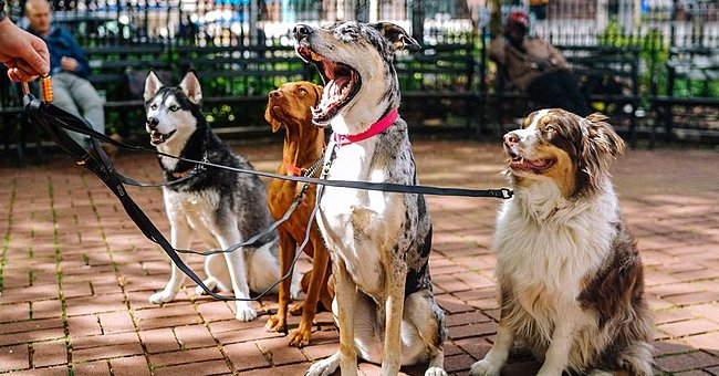 Daily Joke: There Are Four Clever Dogs