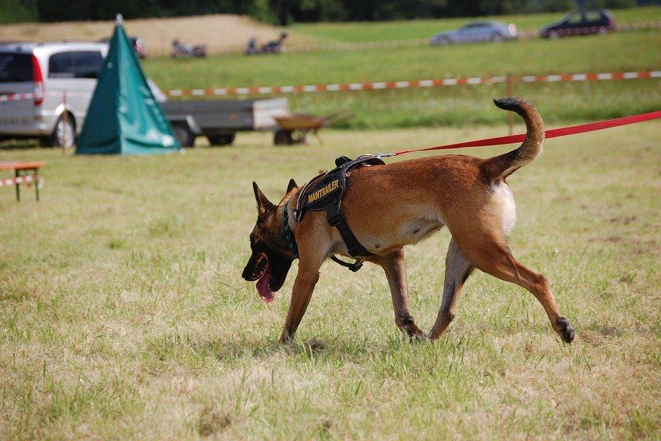Perro policía │Imagen tomada de: Pixabay