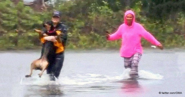 TV reporter interrupts live broadcast to save a dog from Hurricane Florence floodwaters