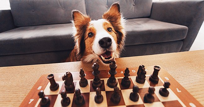 Three Hilarious Jokes about Playing Chess and Other Games