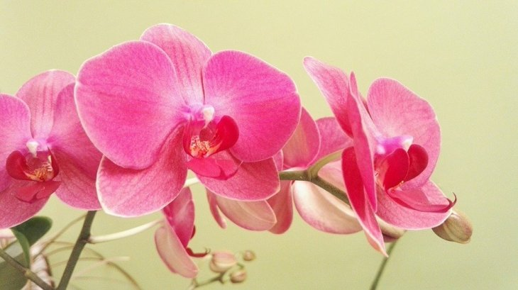 Quelle: Orchidee