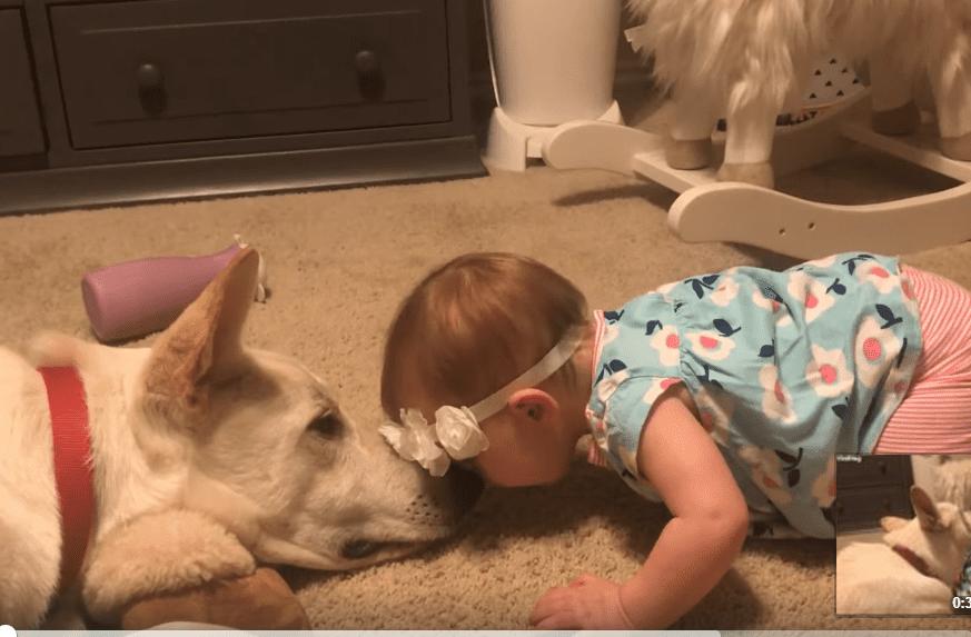 Une petite fille fait des bisous au chien.   Photo : Facebook/ViralHog