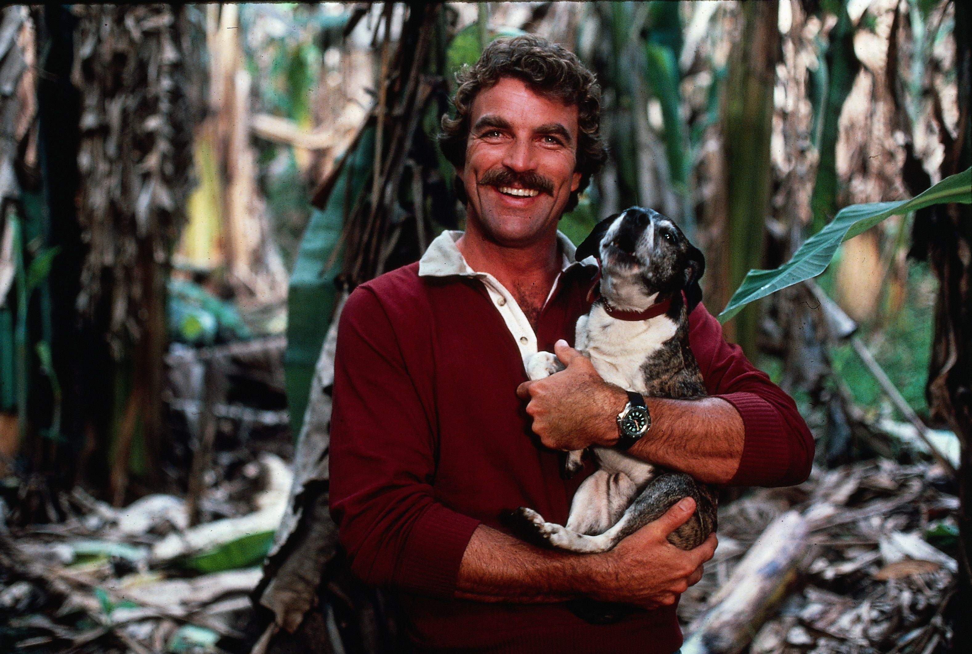 Tom Selleck holding a small dog as he poses in a tropical woodland, Hawaii, 1983. | Source: Getty Images