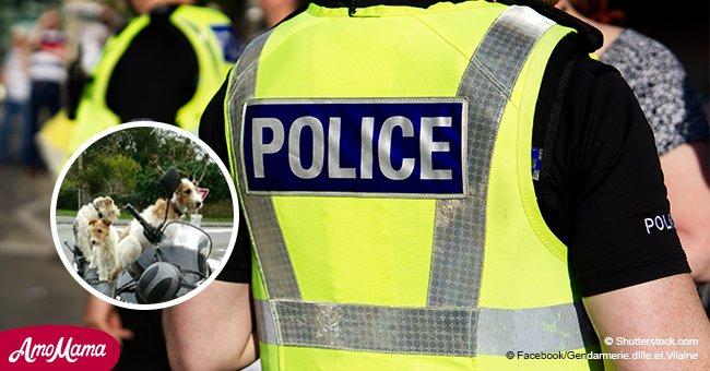 La police interpelle un motard pour avoir tenté de transporter trois chiens à la fois