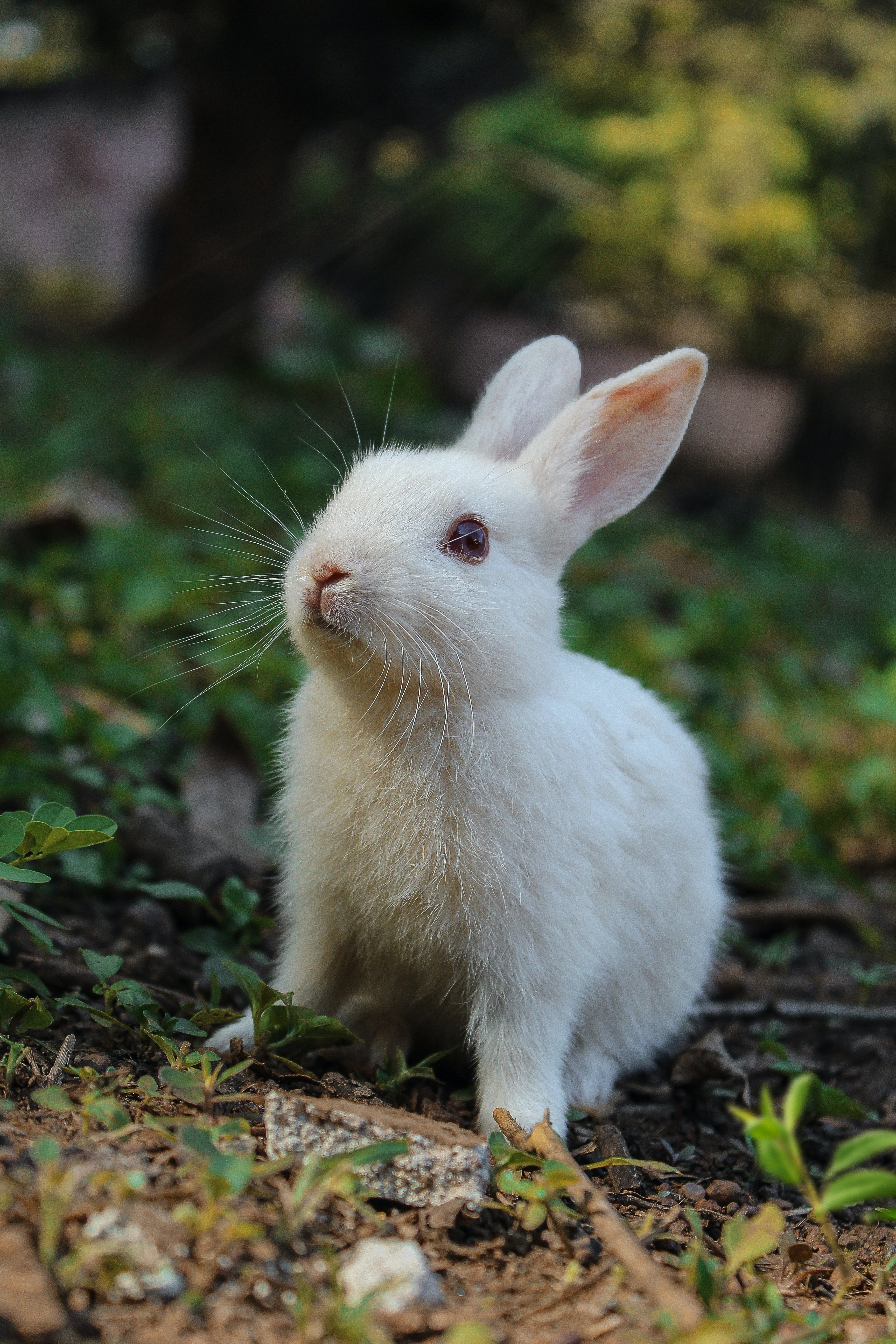 Pictured - A white rabbit on green grass | Source: Pexels