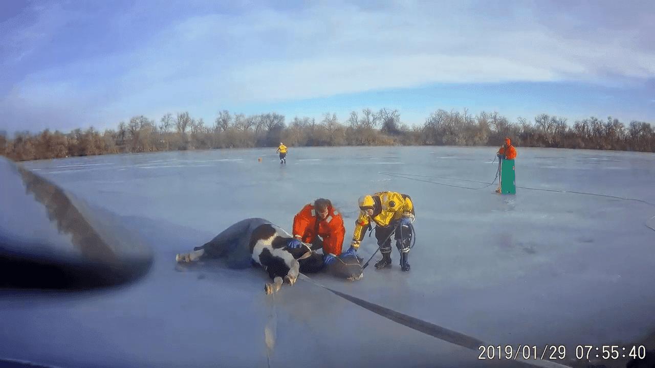 Bomberos de Loveland rescatan a un caballo atrapado en un lago congelado. | Foto: YouTube/Loveland Fire Rescue Authority