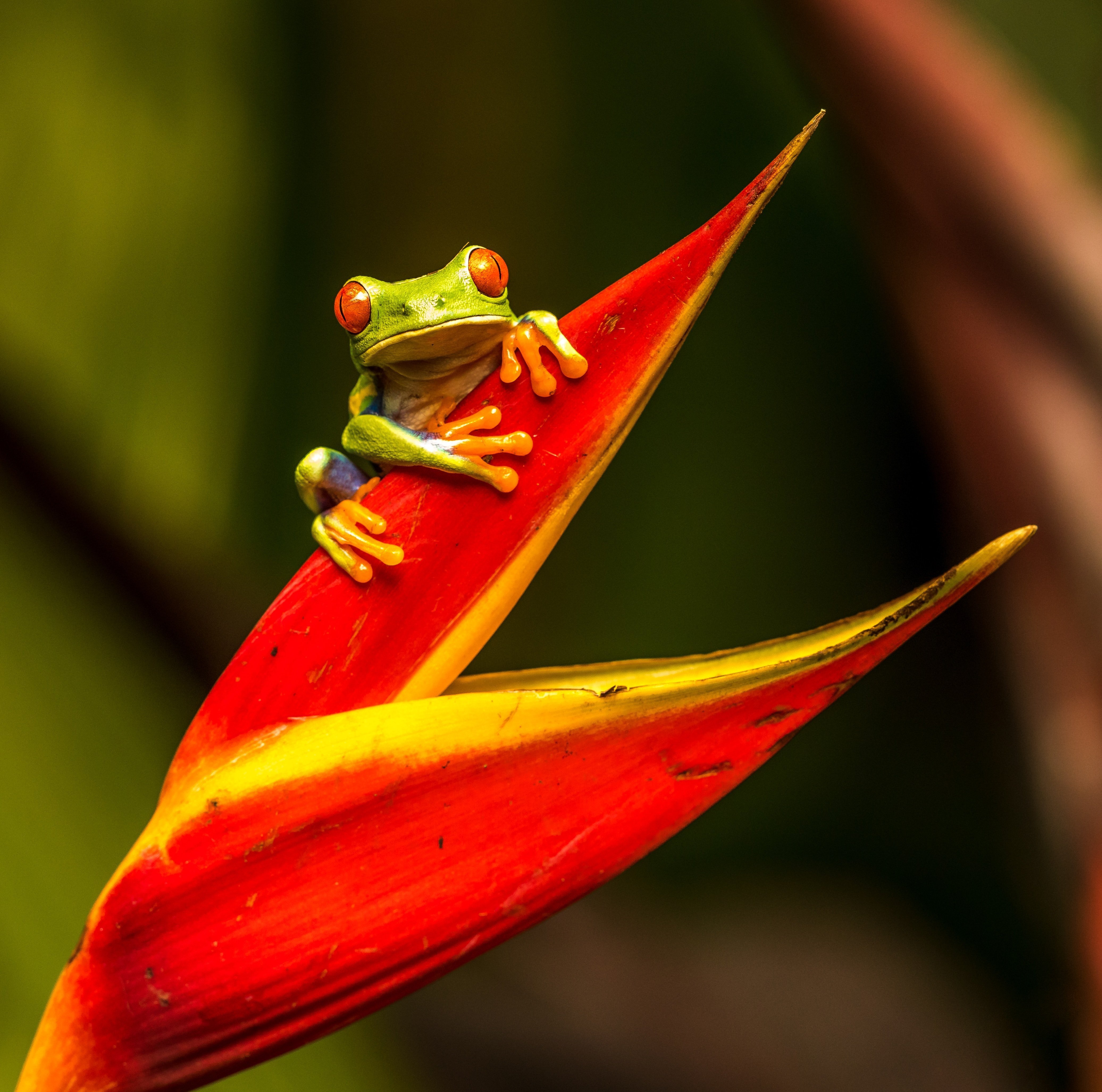 A frog sitting on a plant. | Source: Unsplash