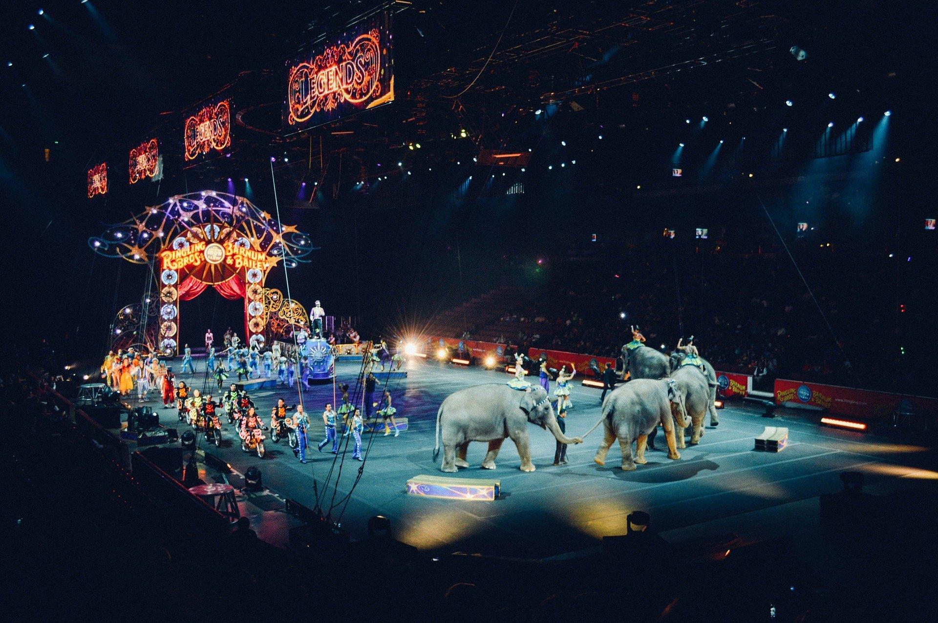 Circus arena with elephants.   Source: Pixabay