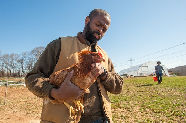 African America farmer with a chicken   Photo: Getty Images