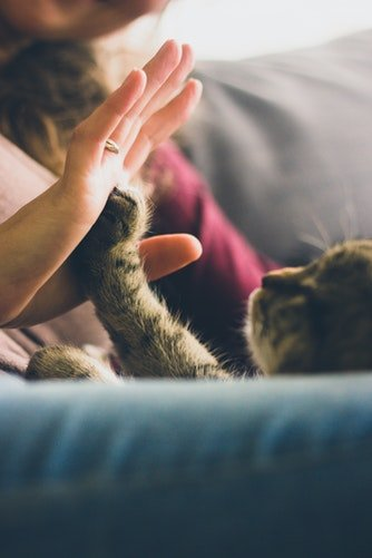 un chat et une femme qui se font la tape | Unsplash