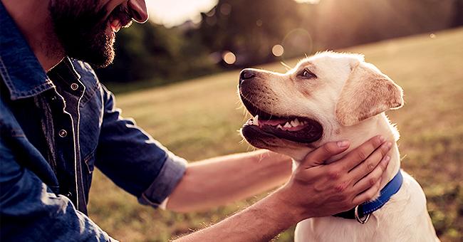 Une femme donne le chien dont elle était propriétaire avec son ex sans qu'il le sache