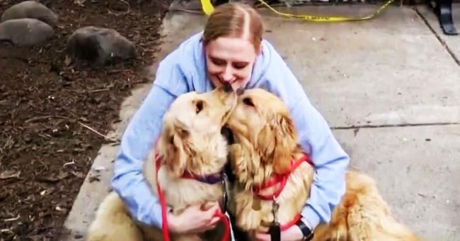 Mujer salva a cientos de Golden Retrievers del mercado de la carne y les da una nueva vida