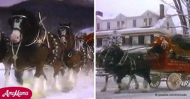 Budweiser Clydesdale bewitched us in 1987 and it still does nearly 30 years later