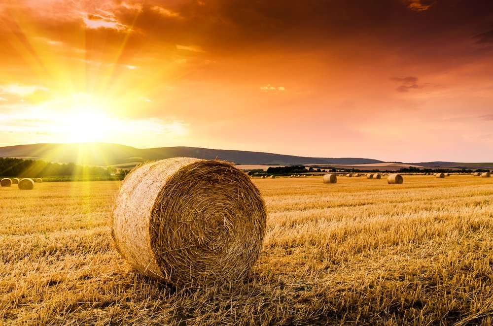 A field with Hay | Shutterstock