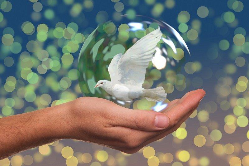 El 21 de septiembre se celebra el Día Internacional de Paz.| Fuente: Pexels