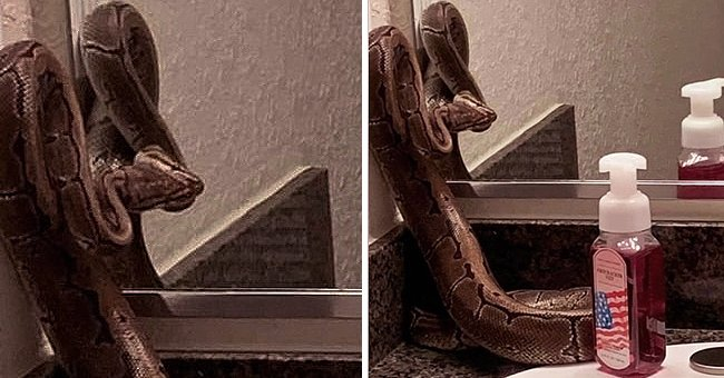 Woman Finds Huge Snake in the Bathroom of Her New Apartment