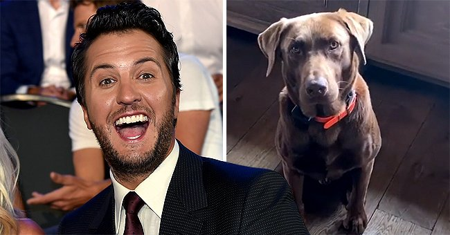 See How Luke Bryan Pranked His Dog Choc in a Hilarious New Video Shared on Instagram