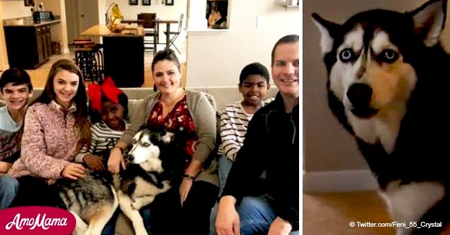 Family's unexpected reunion with husky comes 4 years after the dog was stolen