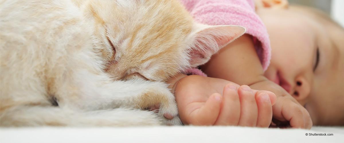 Cómo un gato astuto logró salvar la vida de un bebé