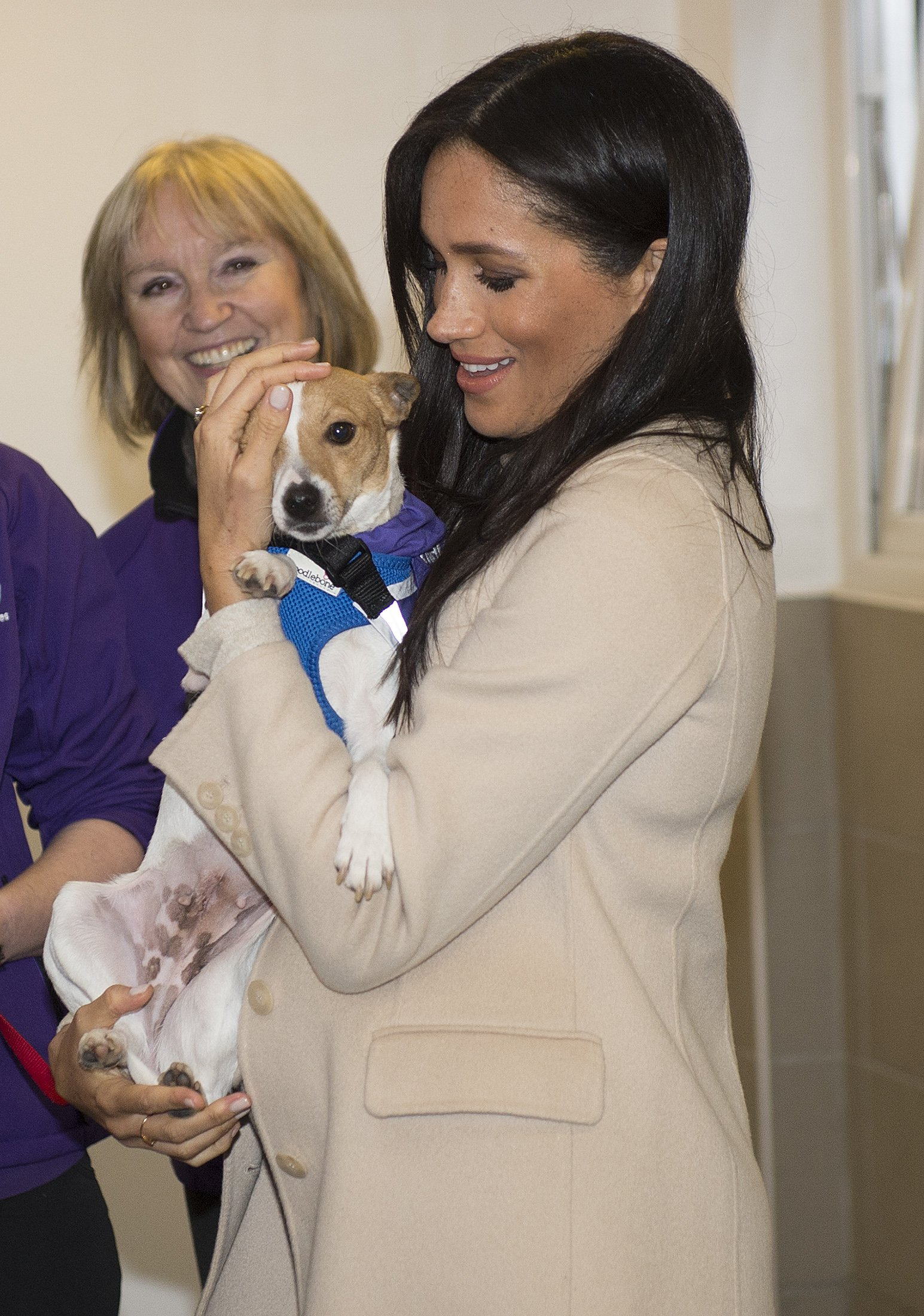 """Meghan, the Duchess of Sussex meets a Jack Russell called """"Minnie"""" during her visit to the Mayhew, an animal welfare charity on January 16, 2019 in London, England. This will be Her Royal Highnesses first official visit to Mayhew in her new role as Patron. 