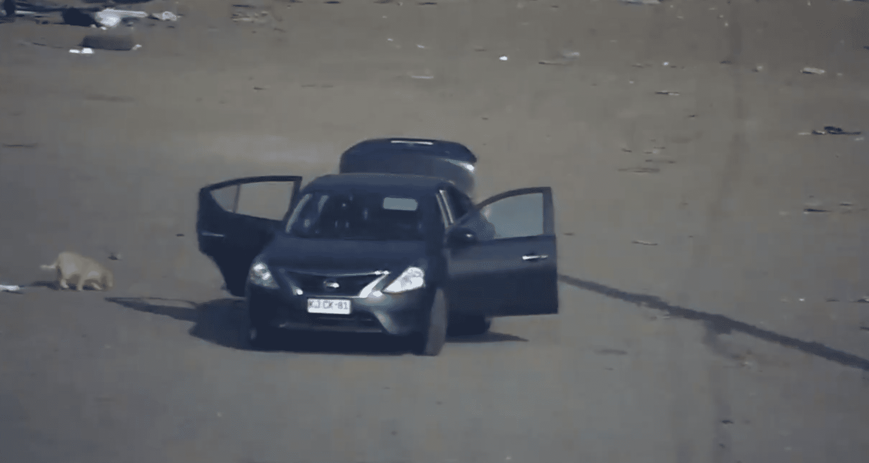 Ils ont laissé sortir l'animal de la voiture avant de partir. | Photo : Twitter/MuniLaPintana