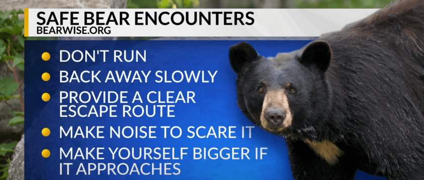Some tips provided by BearWise in case someone happens to run into a bear | Photo: Youtube.com/CBS 17
