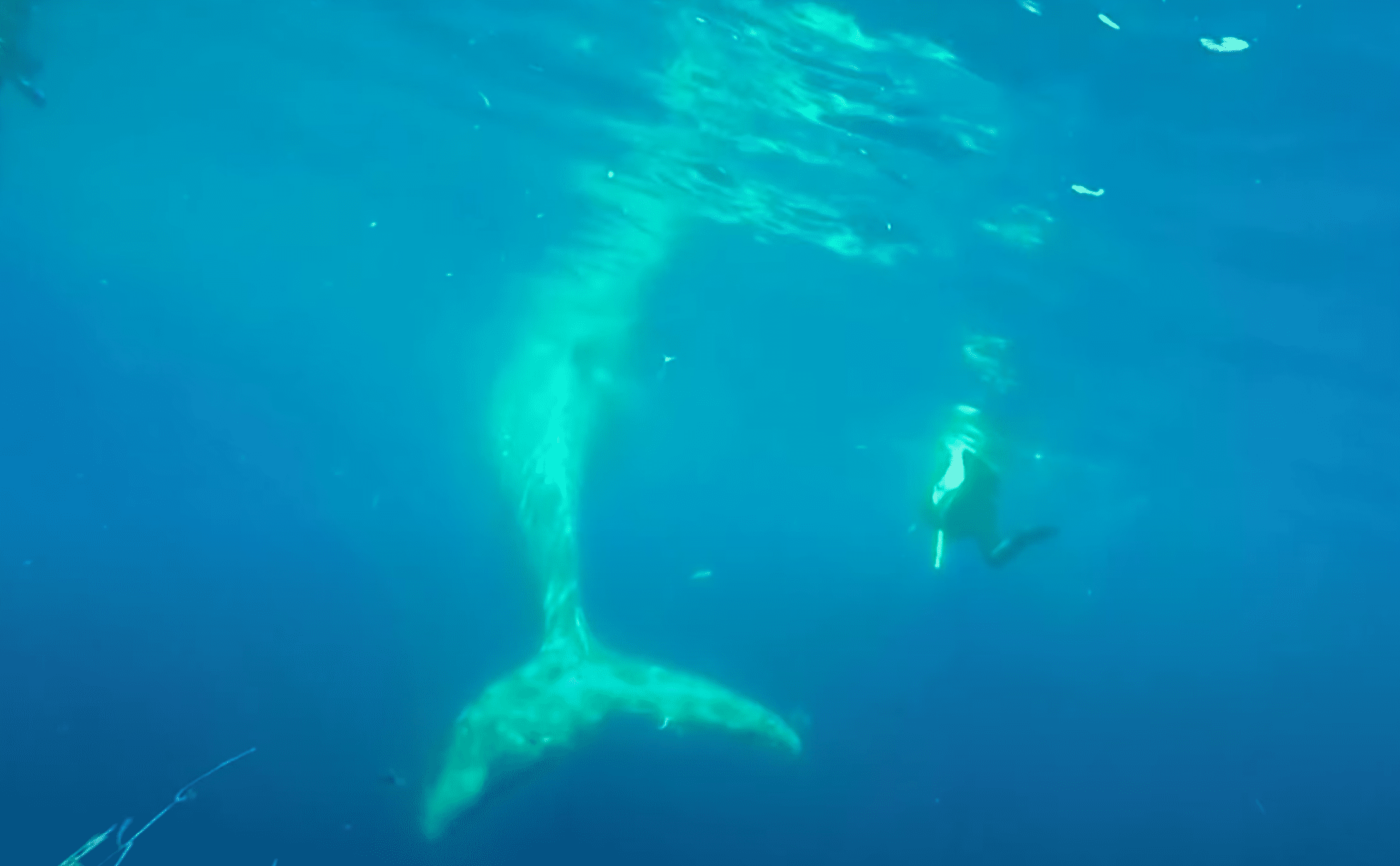 Whale freed from fishing net | Photo: Youtube/Reuters