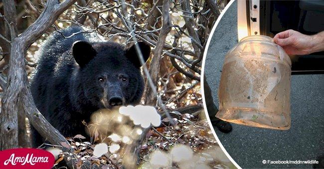 Le petit ours est sauvé par des gens courageux après que sa tête soit restée coincée dans un bocal