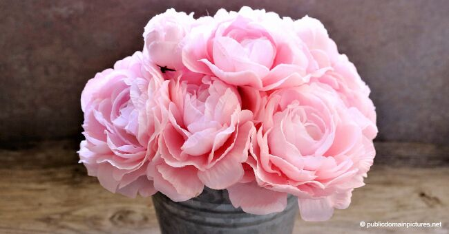 12 Surprising Facts All Peony Enthusiasts Should Know About
