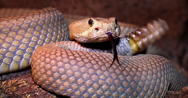 Close up photo of a snake   Photo: Shutterstock