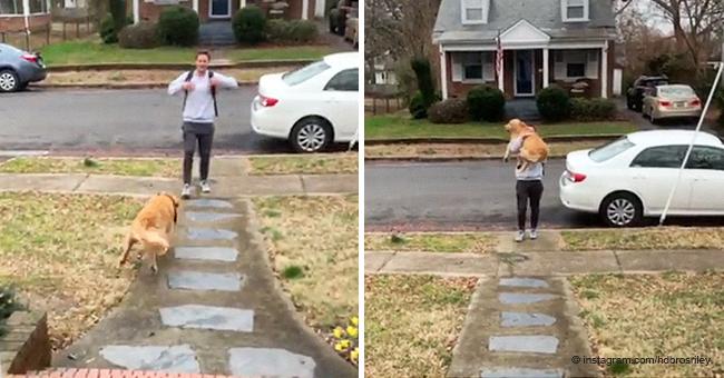 Lindo momento en que enorme perro corre al ver a su dueño y salta en sus brazos por un abrazo