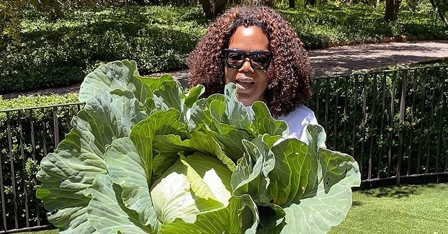 Oprah Winfrey's Love of Gardening Shows in Her Home-grown Harvest – See the Huge Cabbage She Grew