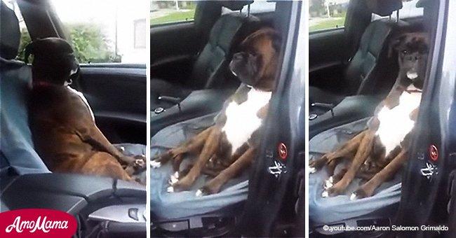 Un chien vexé refuse de communiquer avec son maître qui lui a menti à propos d'un rendez-vous chez le vétérinaire