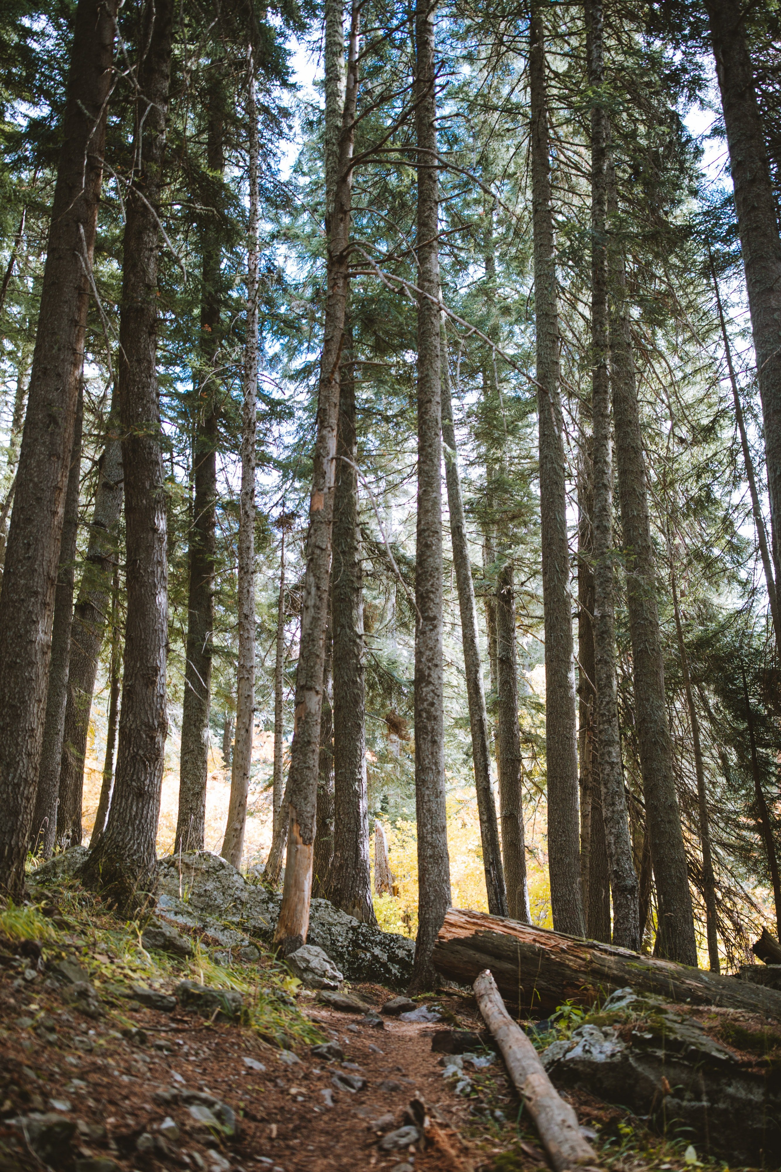 Pictured - A photo of the forest during daytime | Source: Pexels